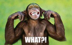 http://socialmediamarketing.couponrainbow.com/landing-page-monkey-webinar/