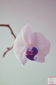 Hey, I found this really awesome Etsy listing at https://www.etsy.com/listing/176707179/orchid-photography-flower-photo-fine-art