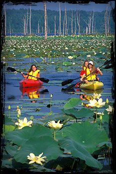 Arkansas Kayaking - Canoe Trips in Arkansas - Adventure State Parks #kayak #kayaking #kayaker