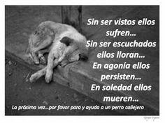 Ayuda a perritos callejeros