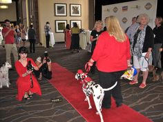You can rock the BlogPaws red carpet like Dayna Hilton and Tango the Fire Safety Dog; paw-parazzi Carol Bryant snaps the action. In addition, you can have your photo taken in front of the sponsors' backdrop (at right).