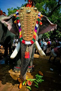 An elephant decorated for the Pooram festival.//Pooram pronounced is an annual festival, which is celebrated in temples dedicated to goddesses Durga or Kali held especially in Valluvanadu area and other adjoining parts of north-central Kerala Indian Elephant, Elephant Love, Elephant Art, Colorful Elephant, Amazing India, Pakistan, World Cultures, Jaipur, Belle Photo