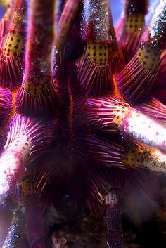 Sea #Urchin detail