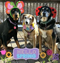 Hello Spring from the Lapdogs #FirstDayofSpring ©LapdogCreations Dog Mom | Rescue Dog | Dog Products | Spring | Life with Dogs | Adopt a Dog: