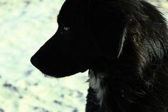 _MG_8337 Explore, Dogs, Animals, Art, Art Background, Animales, Animaux, Pet Dogs, Kunst