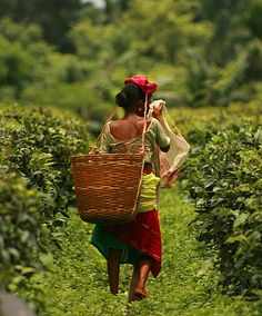 Tea Plantation Workers by Akarsh Simha, via Flickr