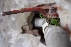 musgo  Fotografía: Mafe Rozo B Todos los derechos reservados © Copyright