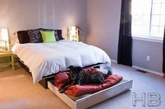 """Ways To Rethink Your Bed """"Dog trundle bed. Slide it under the bed during the day and bring it out at night."""" I need this""""Dog trundle bed. Slide it under the bed during the day and bring it out at night. Murphy Bed Kits, Murphy Bed Plans, Lit Plate-forme Diy, Cama Murphy, Wooden Pallet Beds, Diy Bett, Dog House Bed, Modern Bunk Beds, Diy Dog Bed"""