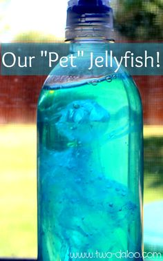 Create a pet jellyfish- a great science experiment for older kids! A fun activity for an ocean unit! Sensory Activities, Sensory Play, Preschool Activities, Summer Activities, Nursery Activities, Indoor Activities, Family Activities, Reggio, Experiment
