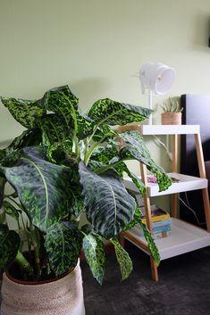 Jurassic parc plant :) kijkje op de slaapkamer #planten