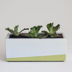 Windowsill Herb Concrete Planter White and Lime by NystromGoods, $32