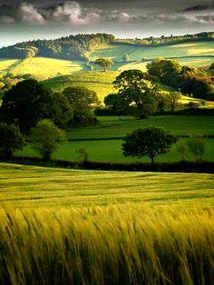 Devon,England,Uk.