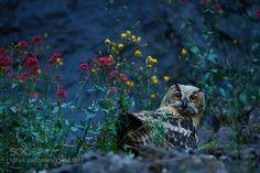 Twilight by stefanrosengarten #animals #animal #pet #pets #animales #animallovers #photooftheday #amazing #picoftheday