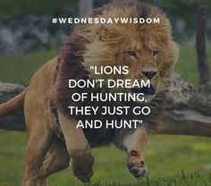 """""""LIONS DON'T DREAM OF HUNTING, THEY JUST GO AND HUNT"""" Hunting Quotes, Wednesday Wisdom, Just Go, Lions, Jay, Animals, Lion, Animales, Animaux"""