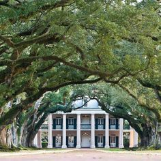 driveway w/ arched trees. Perfect southern home