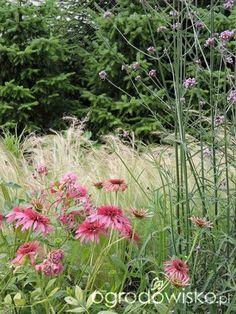 Zielonej ogrodniczki marzenie o zielonym ogrodzie - strona 943 - Forum…