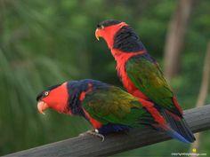 birds   Birds Wallpapers