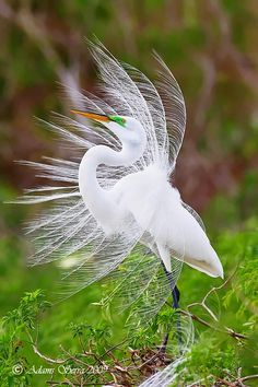 Egret on a Windy Day - awesome