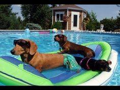 Fiesta canina en la piscina