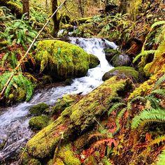 """One day I caught myself smiling for no reason, then I realized I was thinking of you""  #oregonexplored #outdoors #oregon #adventure #oregonexplored #drippin_awesome #oregon #outdoors #waterfall #falls #hiking #hike #nature #portland #pnw #northwest #winter #forest #picoftheday #bestofthenorthwest #discoveroregon #instalike #beautiful #eaglecreek #water #rain #instahike #traveloregon #upperleftusa #outdoors #Padgram"