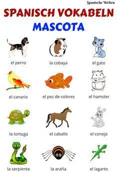 Mit den eigenen Haustieren Spanisch lernen macht gleich doppelt Spaß! Deshalb zeit dir diese Übersicht Spanisch Vokabeln zu den meist verbreiteten Freunden des Menschen.