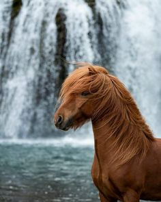 Startseite – Ponyliebe Fotografie – Art Of Equitation Most Beautiful Horses, All The Pretty Horses, Animals Beautiful, Cute Horses, Horse Love, Horse Photos, Horse Pictures, Animals And Pets, Cute Animals