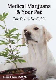 Medical marijuana for dogs