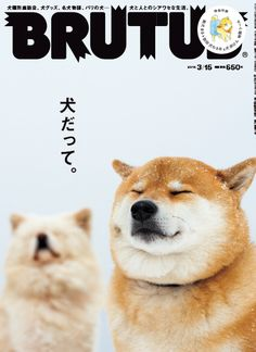 I really like the font used in the magazine cover. I like how the headlines are not blocking the dogs faces. Japanese Dogs, Japanese Prints, Japanese Design, Magazine Wall, Magazine Design, Magazine Layouts, Magazine Covers, Editorial Layout, Editorial Design