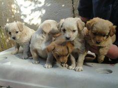 Dog Rescue Greece  Non-profit organisatie die honden aan een beter leven helpt.