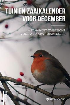 Vegetable Garden, Garden Plants, December, Winter Garden, Outdoor Life, Home And Garden, Seasons, Green, Animals
