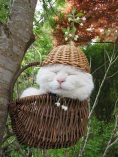 Shironeko | 14 Famous Internet Cats Who Should Never Retire... That zen, that hat, that face. The world would be lost without his pictures showcasing the importance of patience.