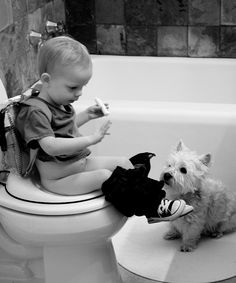 """""""You Can Do It!"""" westie helping in the bathroom"""