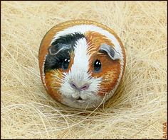 Hand painted rock. Guinea pig - bjl