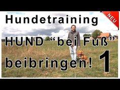 Hundeerziehung Hundepension Salostowitz - YouTube