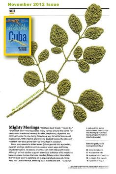 Moringa...National Geographic