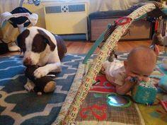 cães e bebês