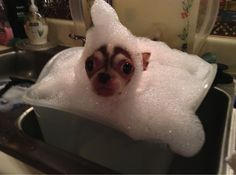 This dog who actually has absolutely no idea how he got into this bubble bath.   27 Dogs Who Have Literally No Idea What's Going On Right Now