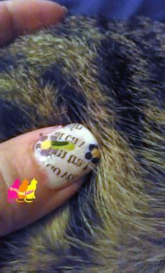 Nails and Kitties: Typocat