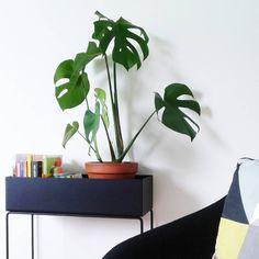 ferm LIVING Plant Box: http://www.fermliving.com/webshop/shop/green-living.aspx