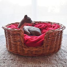 Tino in a Blanket Bed - a beautiful Oval Rattan Basket dressed with super-soft Double Fleece Blankets.