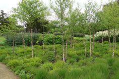 birch / grass garden
