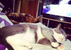 . . . #viiruthecat #kallethecat #cats #instacat #catsofinstagram #cuties