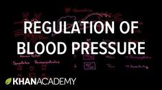 Regulation of blood pressure with baroreceptors   NCLEX-RN   Khan Academy