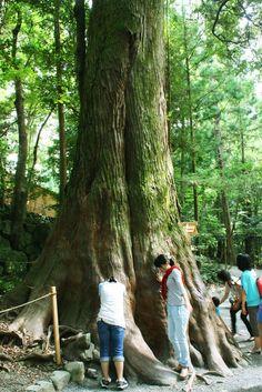 日本最大のパワースポット「伊勢神宮」の中でもさらにパワーがみなぎるスポットはここだ!   三重県   Travel.jp[たびねす]