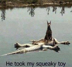 He took my squeaky toy!!!