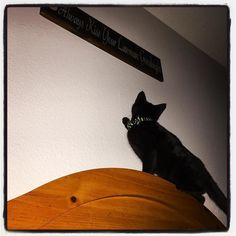 Further adventures of #batcat. He has discovered if he starts at the foot of the bed he can run and launch himself up to land on the top of the headboard. I believe folks we've entered the preschool years of cathood. He goes back to the vet for his last vaccine/rabies shot tomorrow. #lifeofaneditor