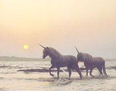 Unicorns//Creatures