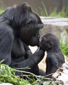 El Beso de mamá ❤                                                                                                                                                                                 Más