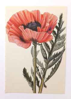 Would love to see poppies and love the coral/navy combo. (Maybe black if it's the only navy in the arrangement). I also love the shape and texture of this one.
