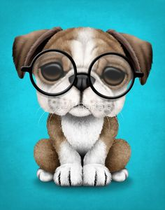 Cute English Bulldog Puppy Wearing Glasses on Blue | Jeff Bartels